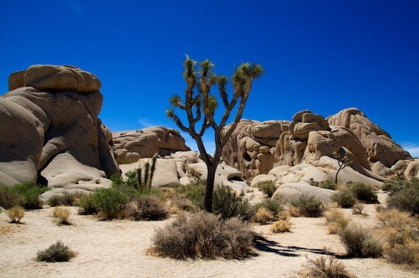 Joshua Tree National park Facts