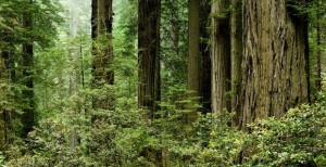 Redwood National park facts and information
