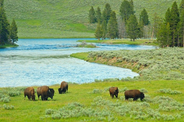 Yellowstone National Park information