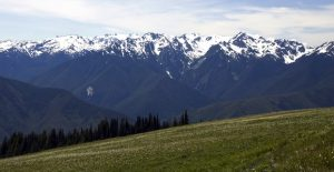 Olympic National Park picture