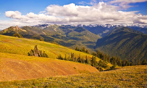 Olympic National park Landscape