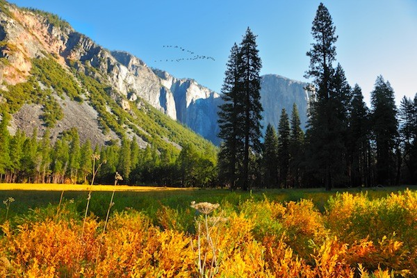 Yosemite National Park Information