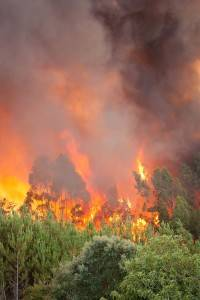 brush fire facts and information