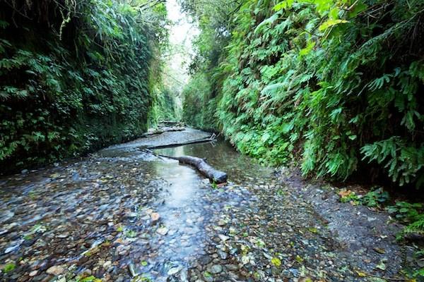 Redwood National Park Information