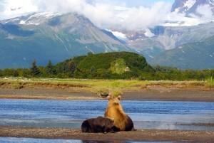 Grizzly Bears in Hallo Bay, Alaska