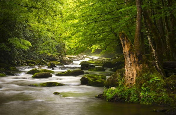 Great Smoky Mountains National Park Information
