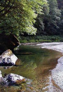 Redwood National Park_NPS