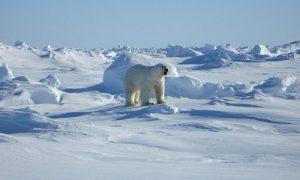 Polar climate.
