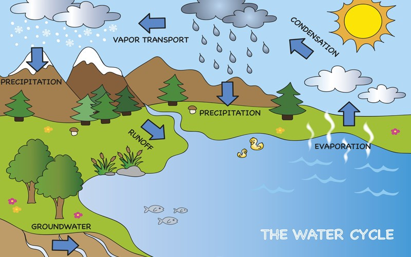 The hydrological process.